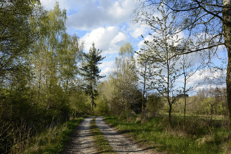 Gritty Path lined by Trees, Bohemian Forest, Czech Republic, Europe royalty free stock image