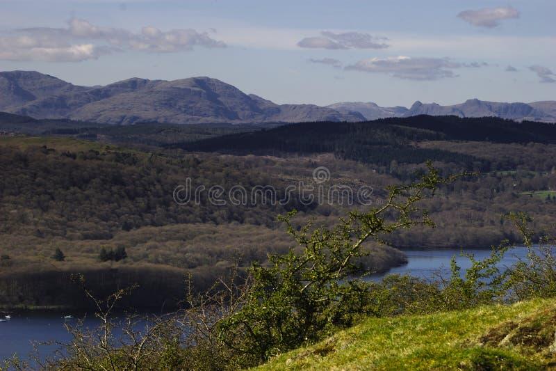Grizedale-Wald - englischer See-Bezirk stockbilder