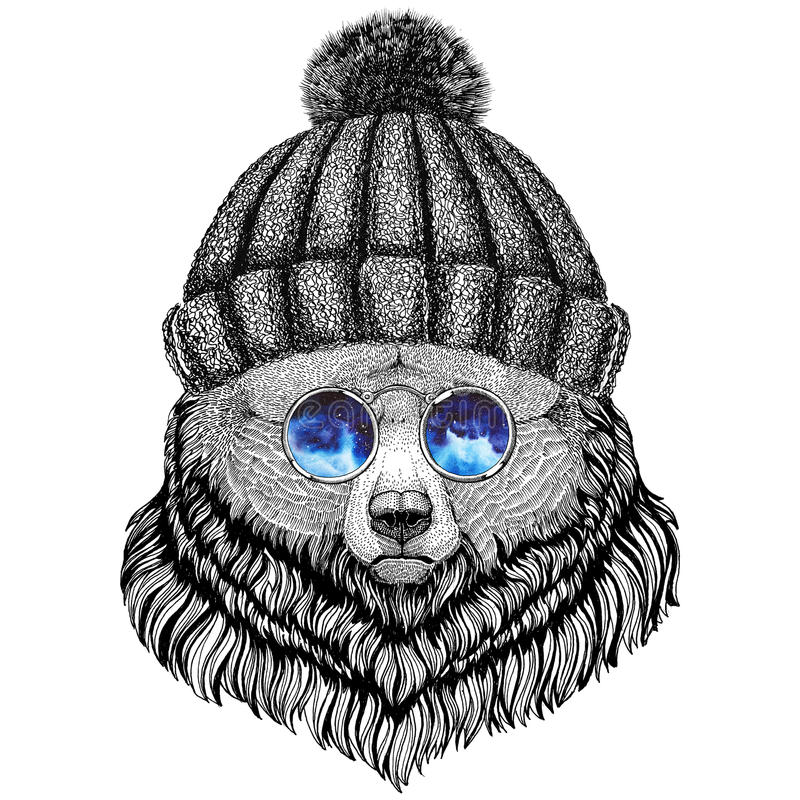 Grizzly Bear Big Wild Bear Wild Animal Wearing Indian Hat