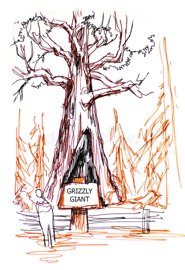 Grizzly giant tree in Sequoia park vector illustration