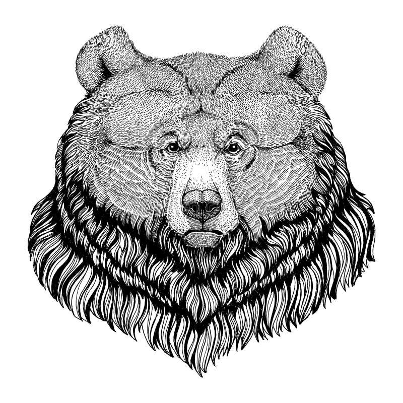 Grizzly niedźwiedzia modnisia stylu zwierzęcy wizerunek dla tatuażu, logo, emblemat, odznaka projekt royalty ilustracja