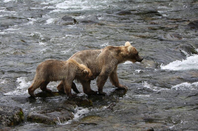 Grizzlybärmutter mit einem Jungen stockfoto