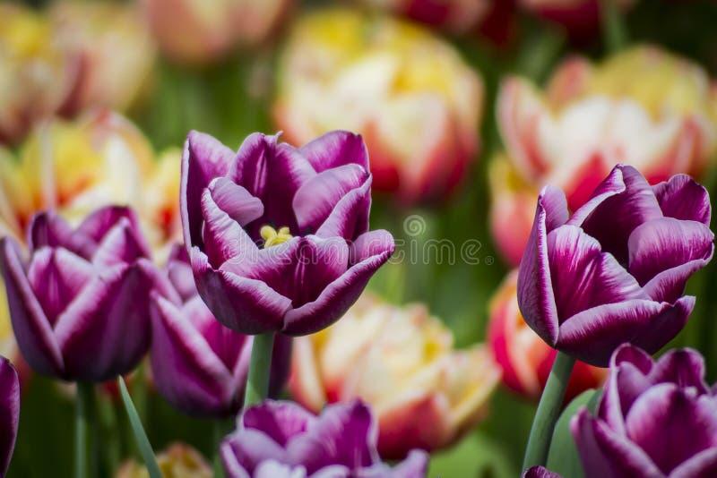 Groß für Frühling stockbilder
