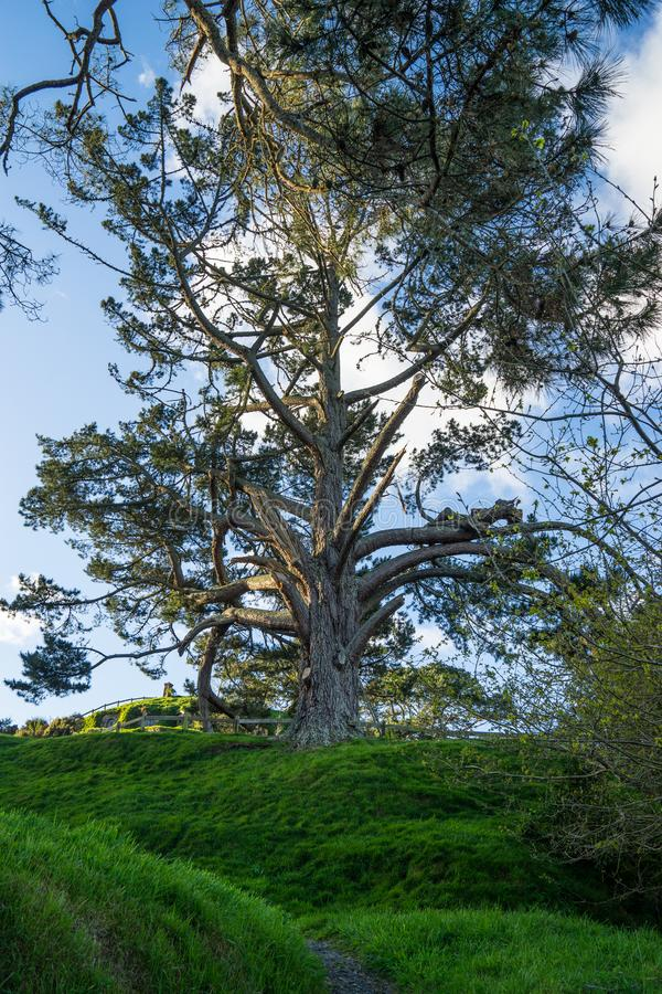 Großartiger Baum auf einen Hügel stockbilder