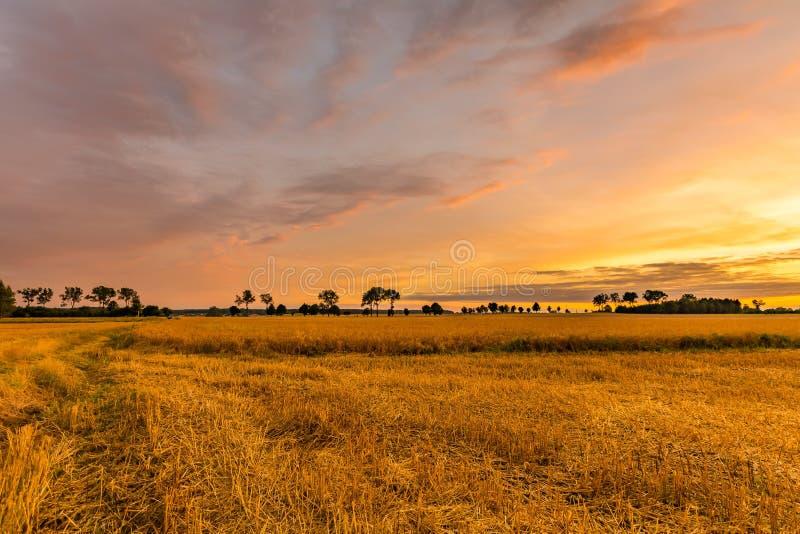 Großartiger Sonnenuntergang über Stoppelfeld stockfotos