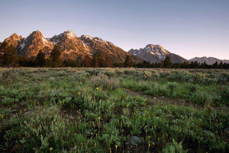 Großartiges Tetons am Sonnenaufgang, Wyoming lizenzfreie stockfotografie