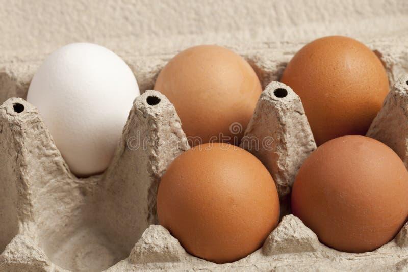 Großaufnahme von den rohen Hühnereien braun und weiß in einem Kasten, Eiweiß, Ei lizenzfreie stockfotos