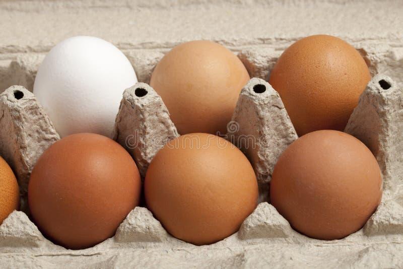 Großaufnahme von rohen Hühnereien im Kasten, Eiweiß, Eibraun auf grünem Hintergrund stockbilder