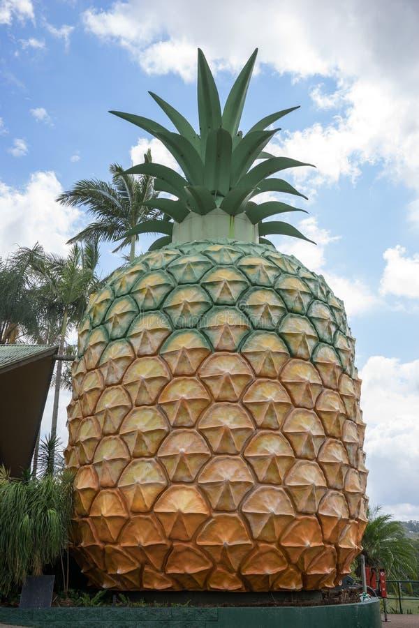 Große Ananas in Queensland Australien stockfotos