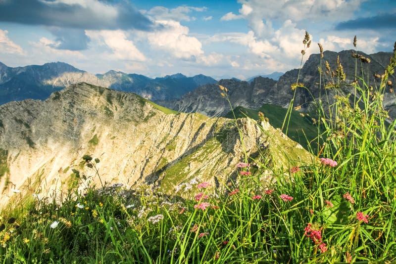 Große Ansicht zu den Bergen im schönen Licht Blumen und Gras lizenzfreie stockfotos