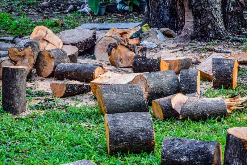 Große Bäume geschnitten in die Stückchen, gesetzt auf den Rasen, die Abholzung stockfoto