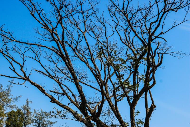 Große Bäume im Dorf, Indien lizenzfreie stockfotografie