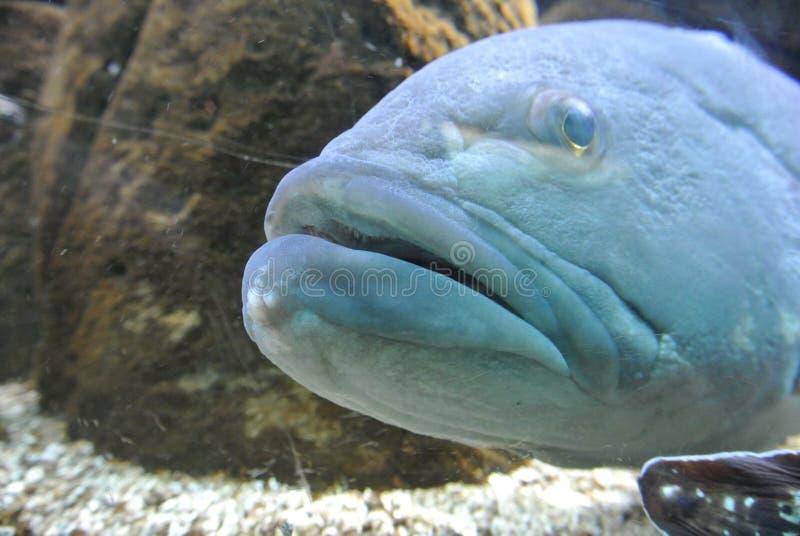 Große blaue Fische im Meer lizenzfreies stockbild