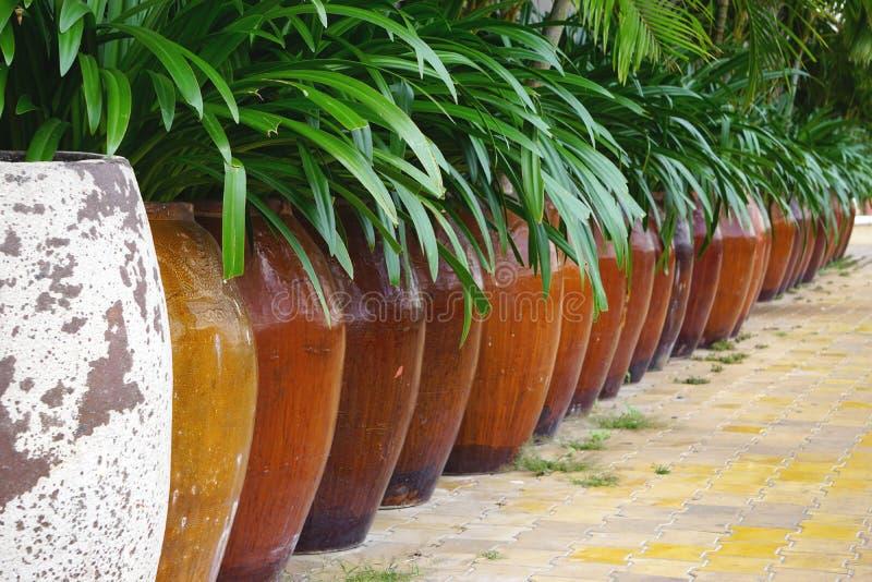 Große braune glasig-glänzende Steinguttöpfe mit grünem belaubtem Laub in Süd-Vietnam lizenzfreie stockfotos