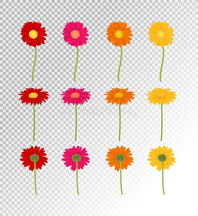 Große bunte Gerbers-Blumen Satz, Vektor-Illustration vektor abbildung