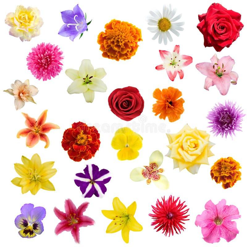 Große Collage von den Blumen lizenzfreie stockbilder
