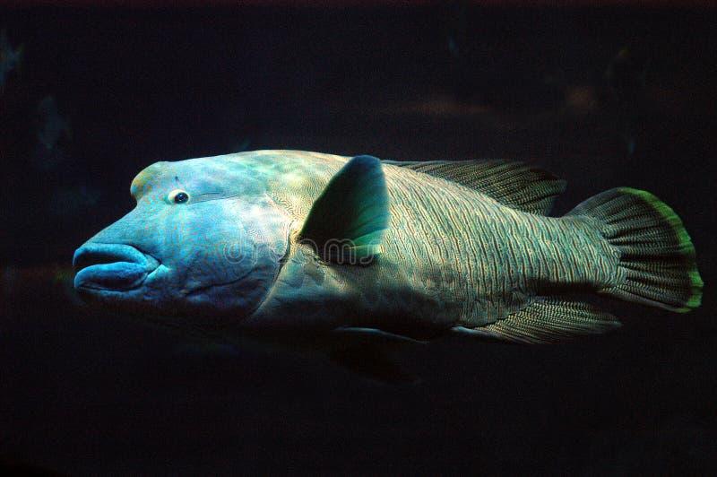 Große Fische lizenzfreies stockfoto