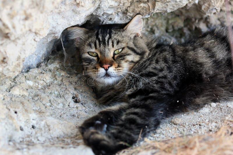 Große flaumige graue Katze, die auf dem warmen Steinweg, dem Stillstehen und dem Schlafen liegt stockfotografie
