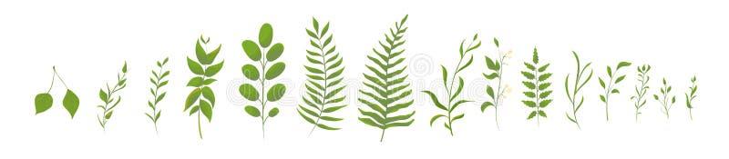 Große gesetzte Sammlung des grünen Waldfarns, tropisches Grün Lokalisierte nat?rliche Bl?tter Vektor lizenzfreie abbildung