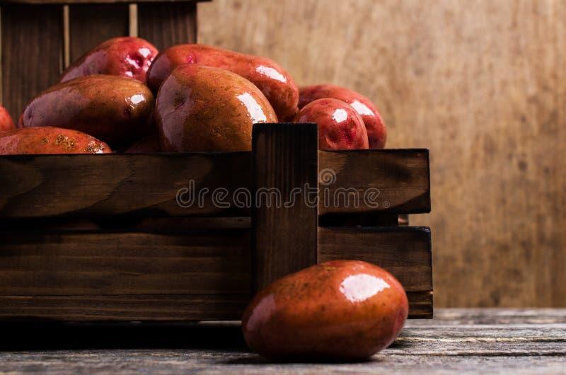 Große gewaschene Kartoffeln lizenzfreie stockbilder