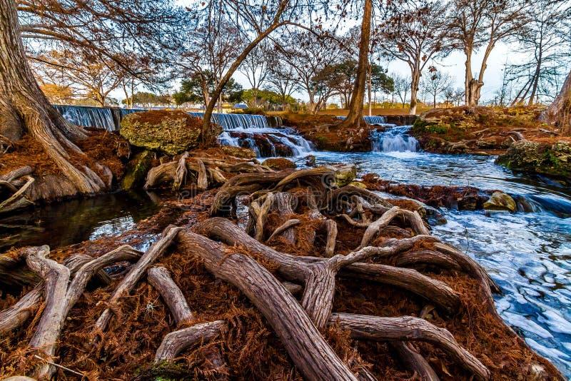 Große Gnarly Zypern-Wurzeln, die Fluss-und Wasser-Fall in Texas umgeben. lizenzfreies stockbild