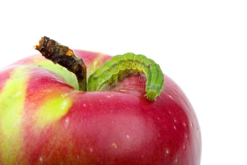 Große grüne Endlosschraube, die über roten Apfel kriecht stockfotos