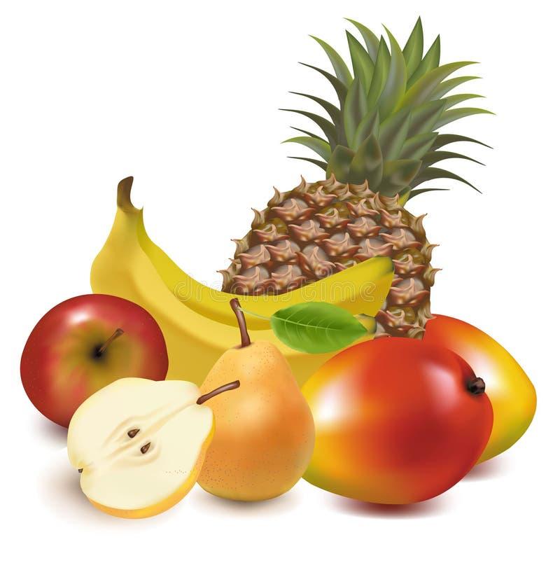 Große Gruppe exotische Frucht. lizenzfreie abbildung