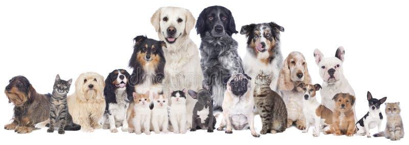 Große Gruppe Haustiere stockfotografie