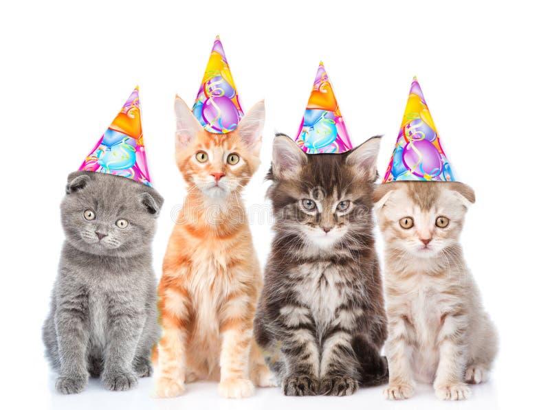 Große Gruppe kleine Katzen mit Geburtstagshüten Lokalisiert auf Weiß lizenzfreies stockbild