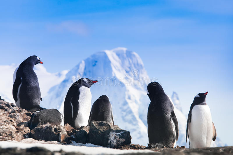 Große Gruppe Pinguine stockfotografie