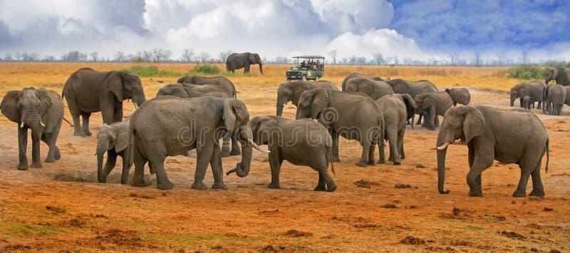 Große Herde von Elefanten auf den Hwange-Ebenen mit einem touristischen LKW im Abstand stockbilder