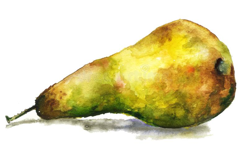 Große, köstliche, saftige gelbe Birne, Hand gezeichnete Aquarellmalerei auf weißem Hintergrund, korrektes Lebensmittel, Illustrat lizenzfreie abbildung