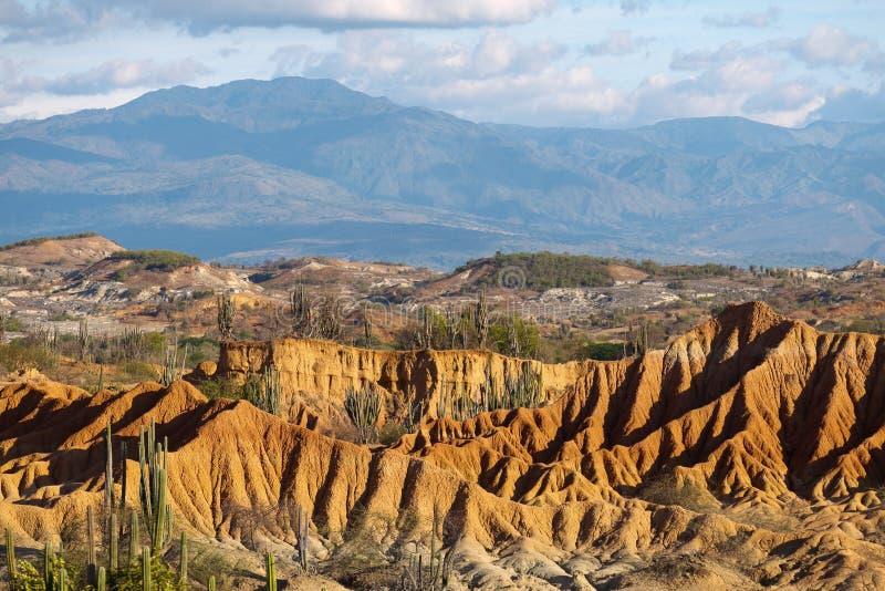 Große Kakteen in der roten Wüste, tatacoa Wüste, Kolumbien, Latein Amer lizenzfreie stockfotos