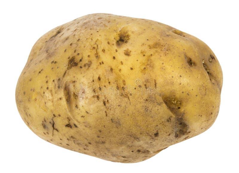 Kartoffel Bilder Kostenlos große kartoffel stockfoto bild frisch ausschnitt 47266716