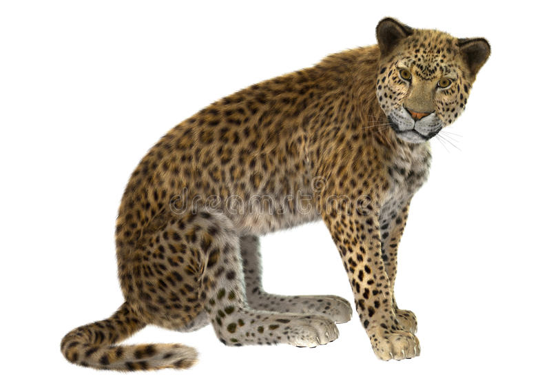 Große Katze-Leopard lizenzfreie abbildung