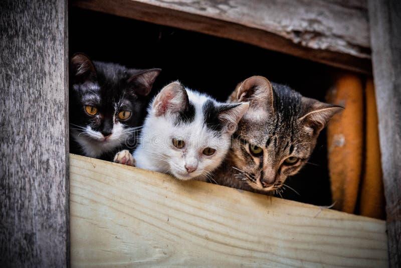 Große Katze und kleines Kätzchen lizenzfreies stockbild