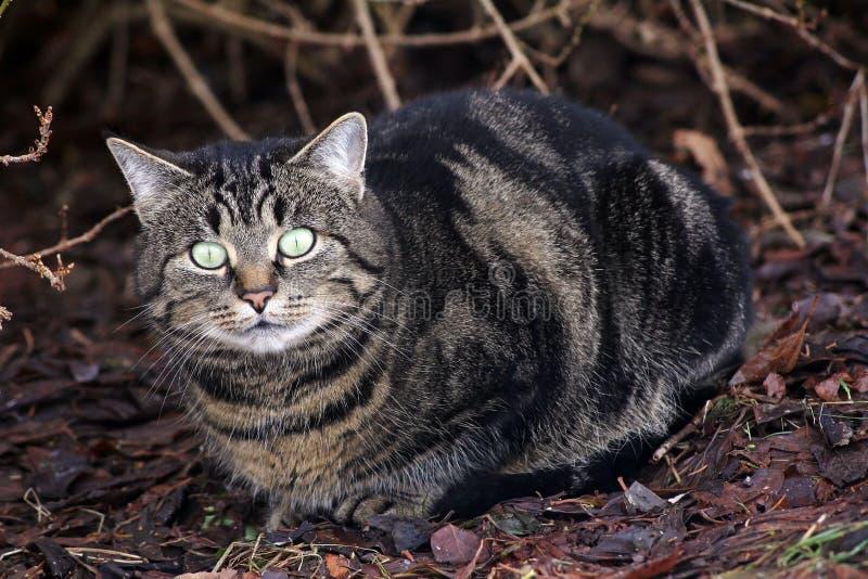 Große Katzenaugen lizenzfreies stockbild