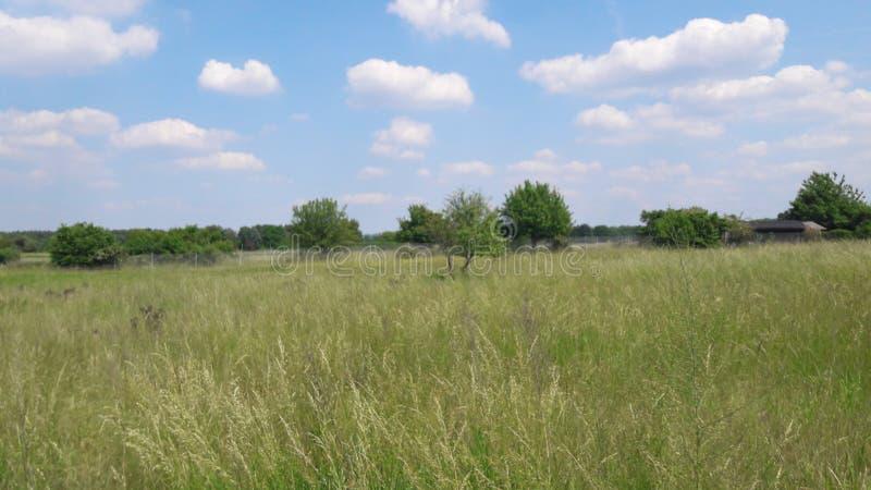 Große Landschaft lizenzfreies stockfoto