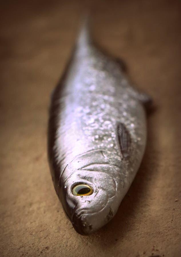 Große lebensechte weiche Fischköderheringe für räuberische Fische lizenzfreie stockfotografie
