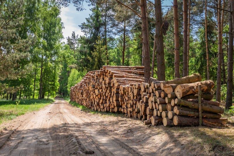 Große Menge geschnittenes Holz nach dem Sturm lizenzfreie stockbilder