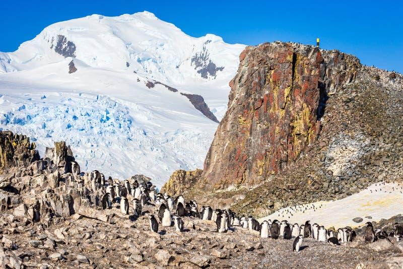 Große Menge von chinstrap Pinguinen, die auf den Felsen mit sno stehen lizenzfreies stockfoto