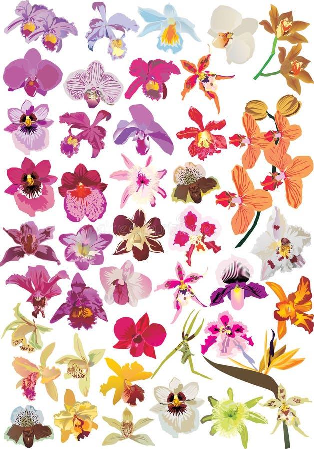 Große Orchideeansammlung stock abbildung