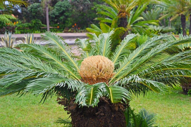 Große Palmeblume stockbild