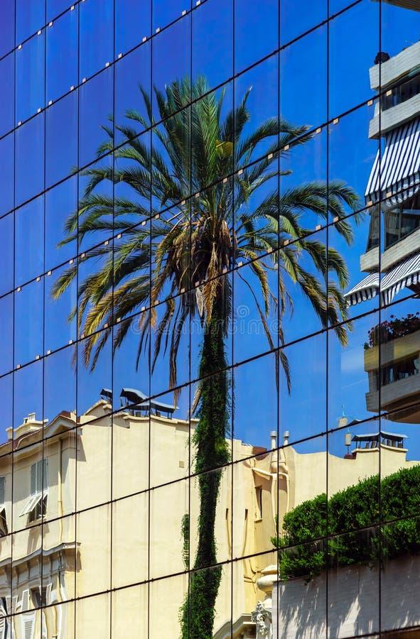 Große Palmereflexion in der Glaswand stockfotografie