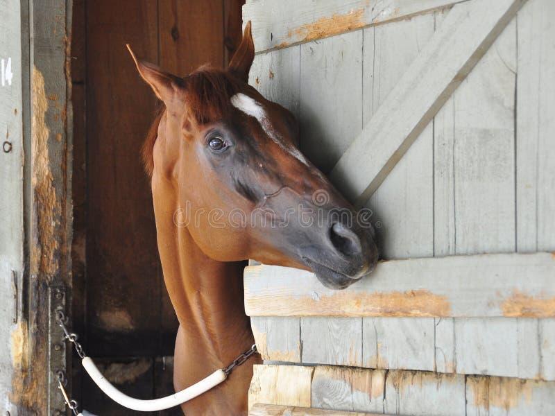 Große Pferderennenfotos durch Fleetphoto lizenzfreie stockbilder