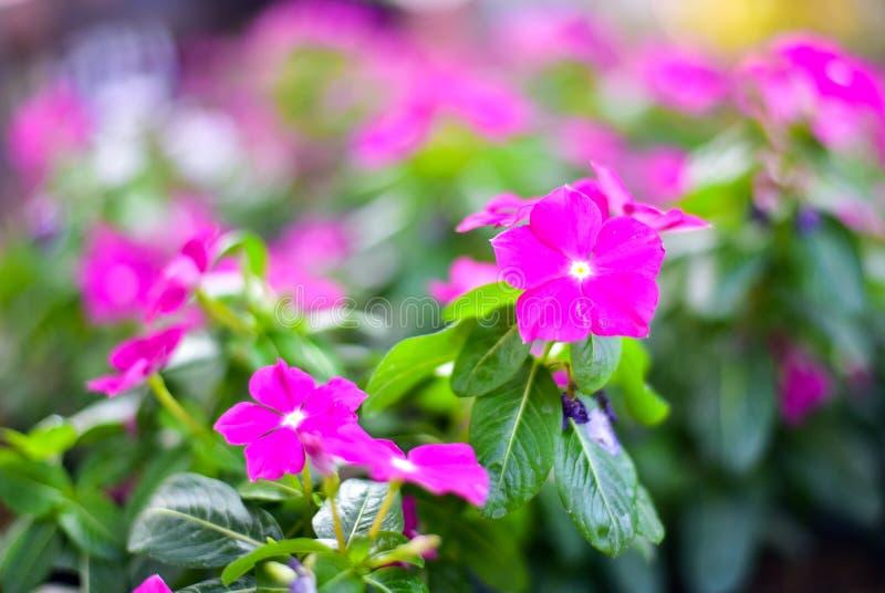 Große purpurrote Blume stockfotos