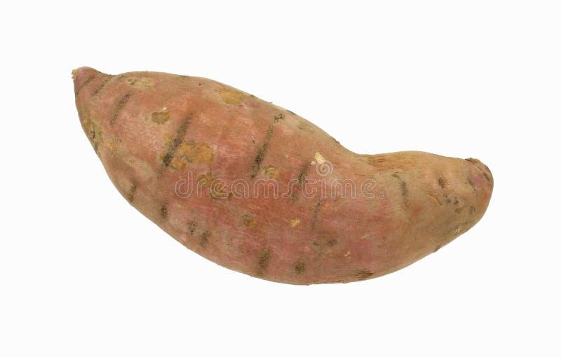 Große süße Kartoffel stockbild