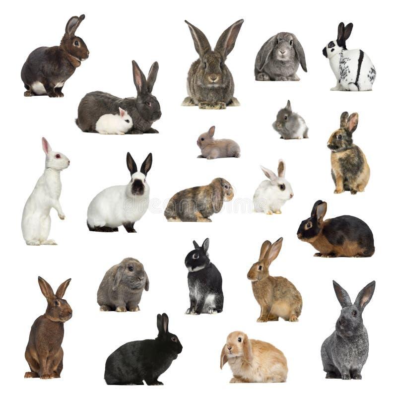 Große Sammlung Kaninchen, Haustier und exotisches, im unterschiedlichen positio lizenzfreies stockfoto