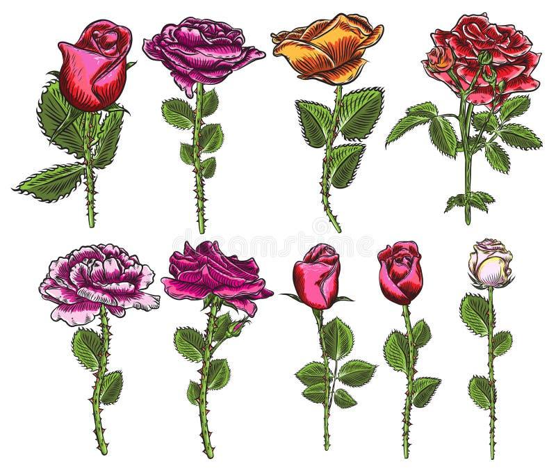Große Sammlung Rosen und Blätter für Design Satz in hohem Grade deta lizenzfreie abbildung