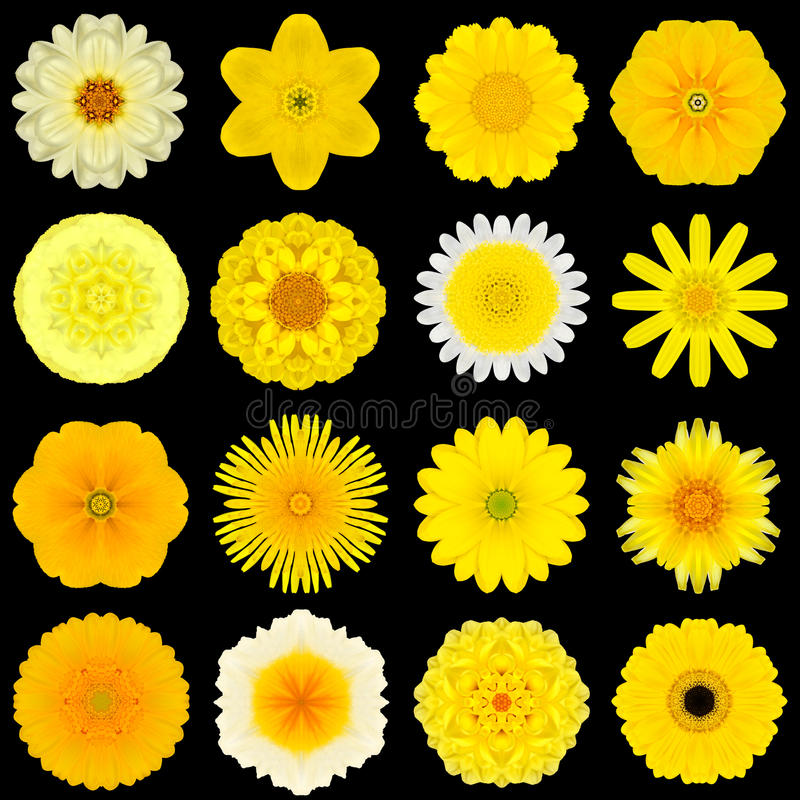 Große Sammlung verschiedene gelbe Muster-Blumen lokalisiert auf Schwarzem lizenzfreies stockfoto